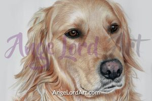 ange-lord-dog-900x600-portrait